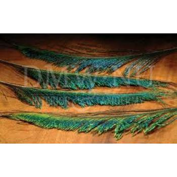 Peacock swords feathers (per 10 )