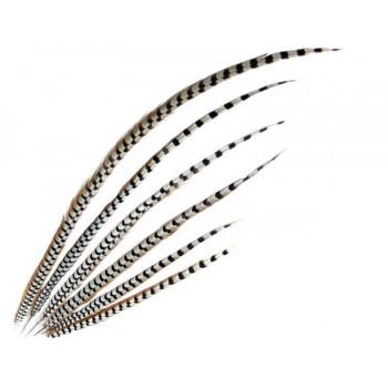 Reeves's pheasant feathers 100 cm per 10 (F6)