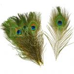 Peacock eye feathers (per 100pcs ) (F8)