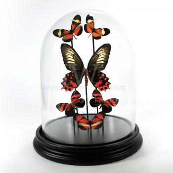 Modern glass dome with a variety of red mounted butterflies
