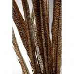 Goudfazant veren 60-80 cm veren (per 5 stuks)