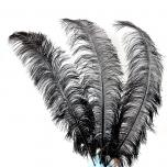 10 x Ostrich feather black 70-80cm (F10)