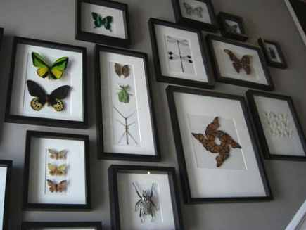 Our mounted butterflies in frame