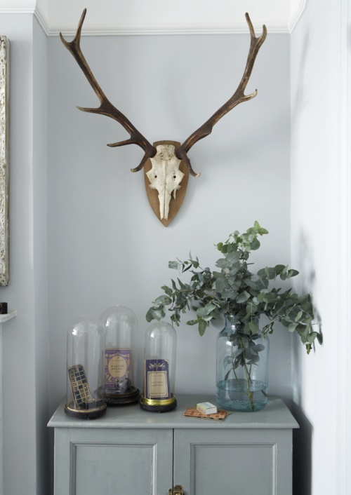 Red deer antlers in the Interior